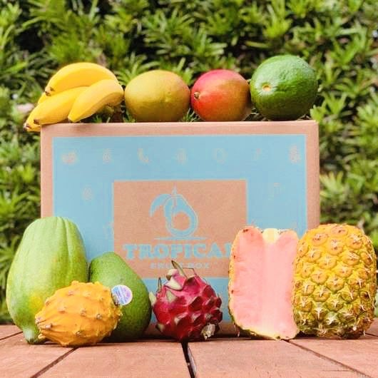 a tropical fruit box surrounded by tropical fruit such as banana, papaya, dragon fruit, pineapple and mango